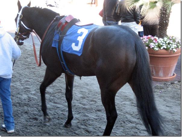horsenumber3